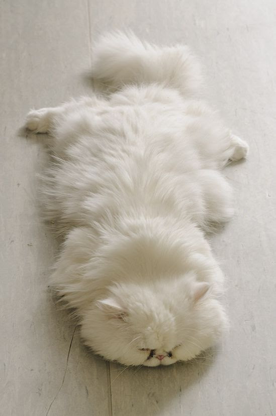 nap time…