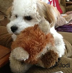 Jodi & His Lion