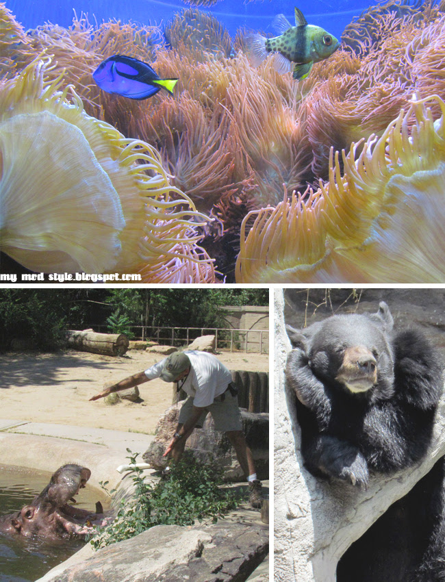 Denver Zoo Collage 8