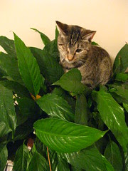 Maggie, not pooping in the plant