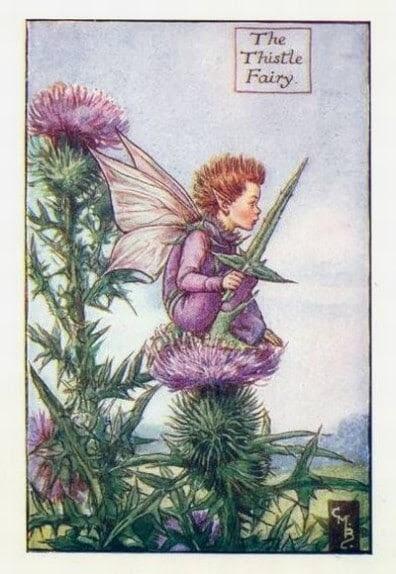 Thistle Flower Fairy Flower Fairy Prints