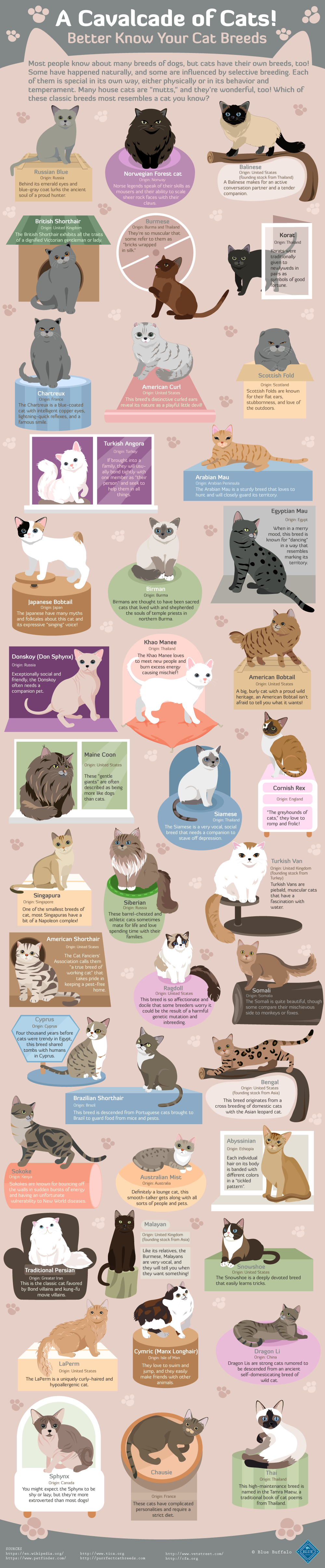 A Cavalcade of Cats: the many breeds of cats, their origins, and quick cat facts