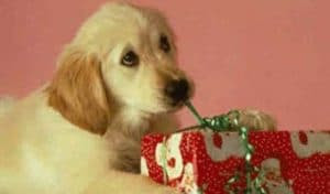 Imagenes de cumpleaños de mascotas
