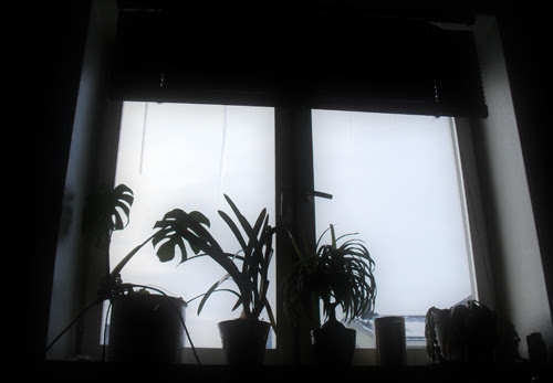 plant silhouettes and icicles