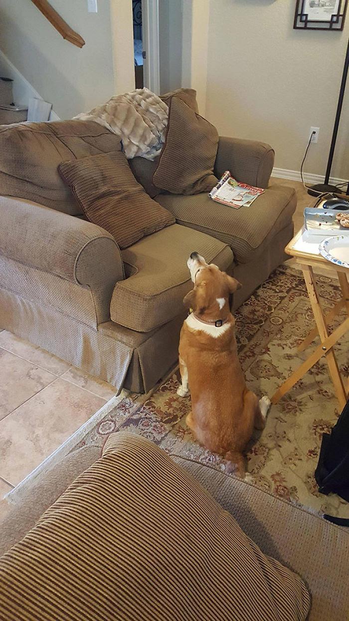 Quand votre chien aveugle demande de la nourriture