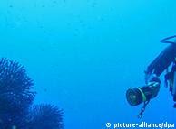 Mergulhador investiga corais do Mediterrâneo, perto da Sardenha