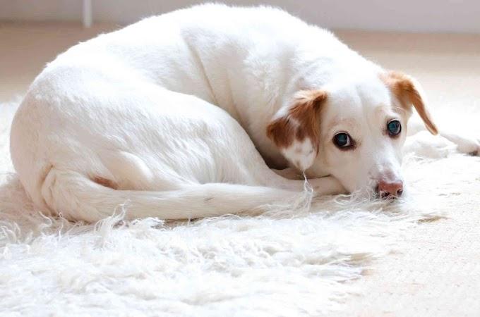 Las mejores ofertas del comparador de seguros para mascotas de Ofertas 10 Mascotas
