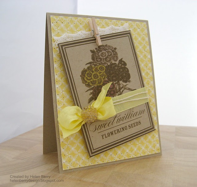 Yellow Sweet William Seed Packet Card