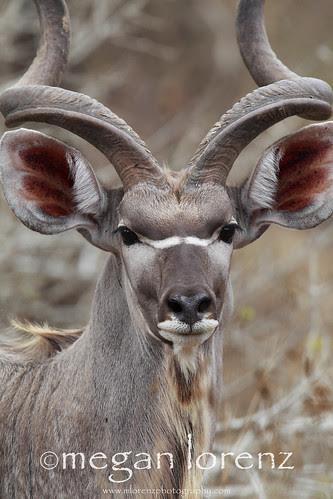 Bushveld Beauty by Megan Lorenz