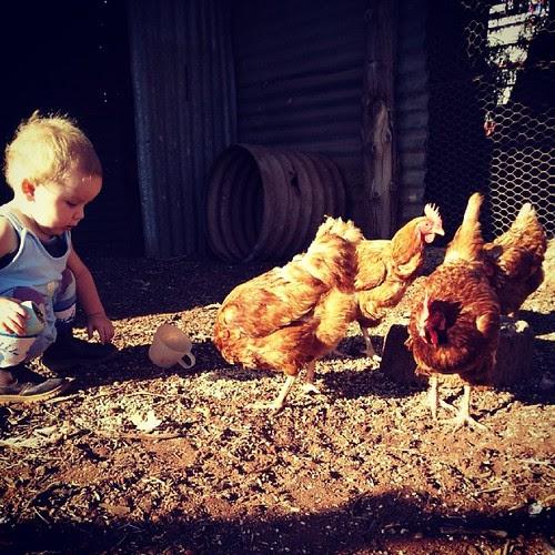 My littlest guys favorite part of the morning - feeding his girls!