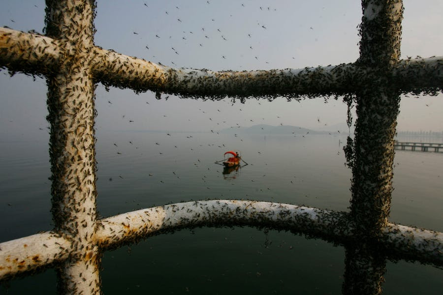 Gnats cover railings along the East Lake in Wuhan, Hubei province in November 2009. The small flies appear in the lake because of water pollution and will leave when the temperature drops.