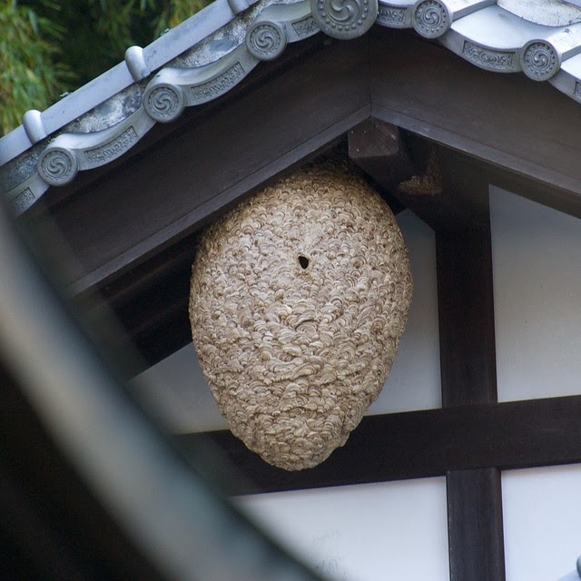 Japanese hornet nest - closeup
