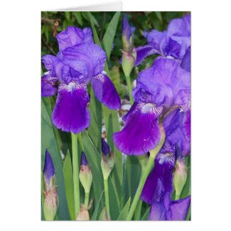 Purple Irises Birthday Card Greeting Cards