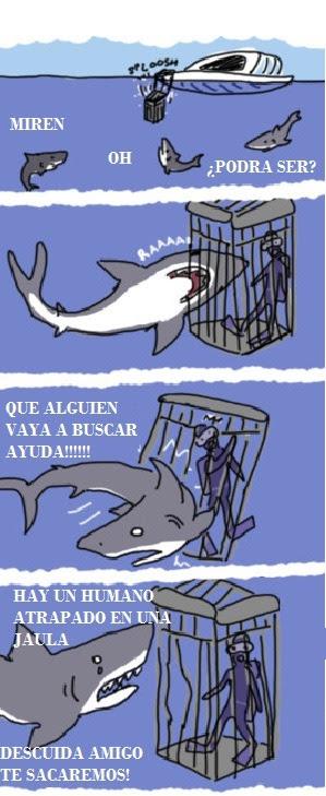 Pobre buceador… Que buenas personas son los tiburones.