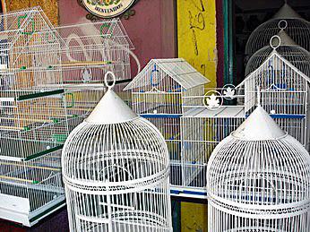 tonala.cages