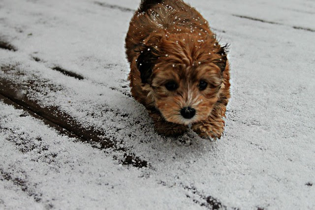 penny in the snow