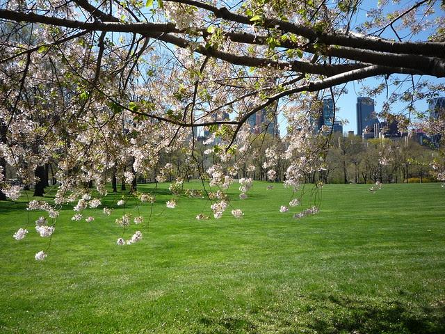 April 5 Central Park