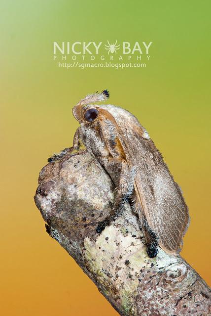 Moth - DSC_6587
