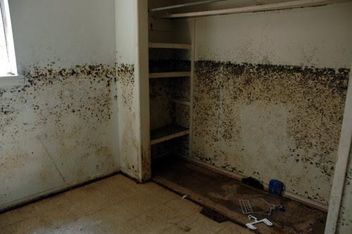 black mold house6-1web copy