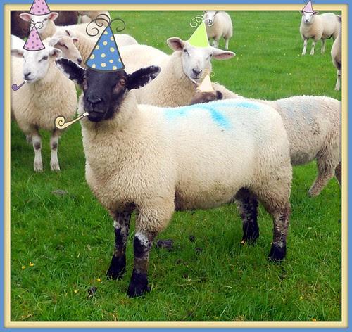 Birthday Lambs
