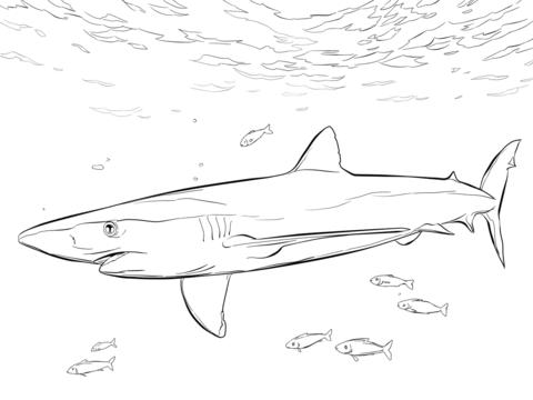 Dibujo De Tiburón Azul Con Peces Piloto Para Colorear Dibujos Para