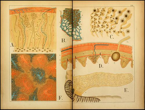 atlas anatomie enfant 08 Atlas anatomique pour écoliers en 1879  information histoire design