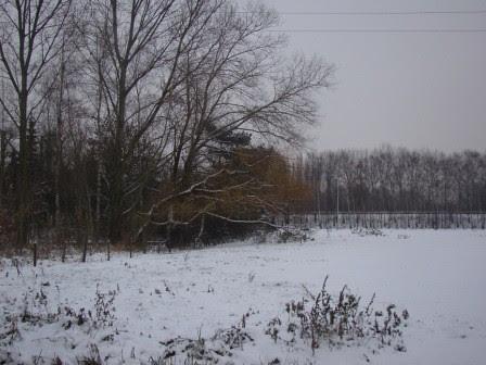 Winter wonderland ...