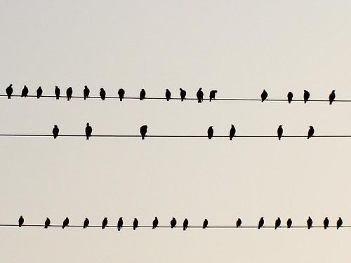 Birds 1 por Joanna Obara (studying, studying, studying)