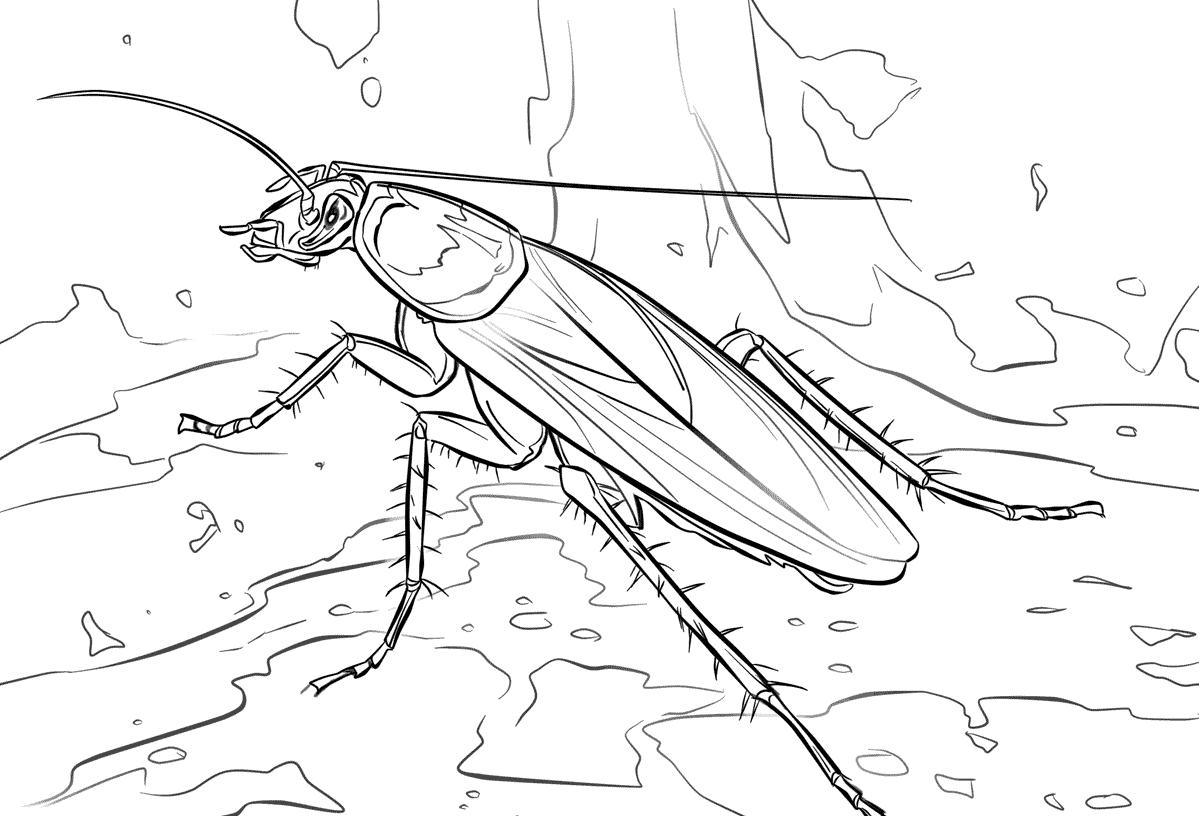 Dibujos De Cucarachas Cucarachapedia