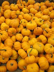 An October Farm Day! 7