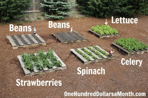 http://www.onehundreddollarsamonth.com/pallet-gardening-how-to-create-a-wood-pallet-garden/