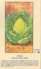legume86 chou