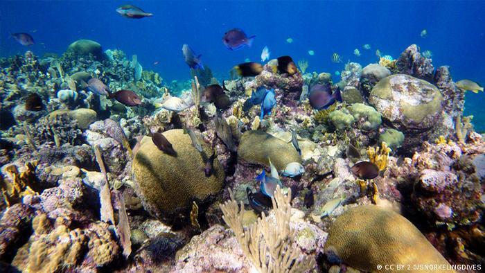 Los esfuerzos de conservación han ayudado a mantener los arrecifes de coral de Roatán relativamente saludables.
