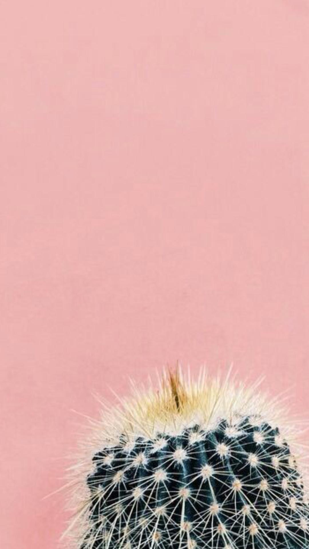 Unduh 990 Wallpaper Iphone Kaktus Terbaik