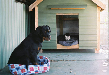 dog kicked out of dog house