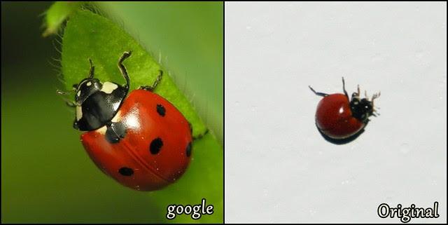 juliana leite maquiagem inspirada na joaninha delineado duplo diferente ladybug make up13