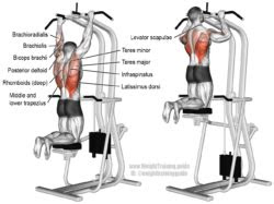 benefits  weighted pull ups  theyre