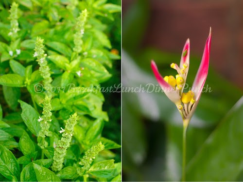 basil and heliconia