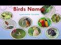 52 Birds name in Tamil
