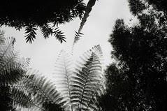 Bali - am Nungnung-Wasserfall (43) unter Baumfarn (dendroaspis2008) Tags: trees bali tree indonesia rboles boom arbres rbol albero bume arbre rvore baum trd indonesien aa   baumfarn
