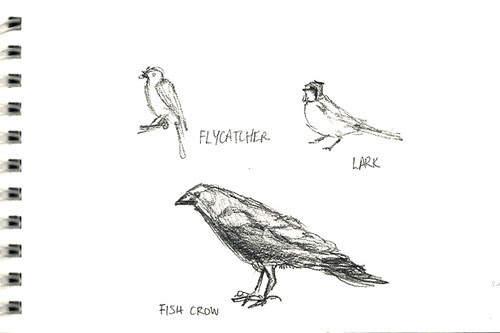 Flycatcher, lark, fish crow
