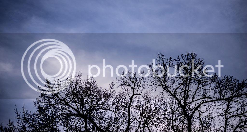 photo trees_zps7719c9c6.jpg