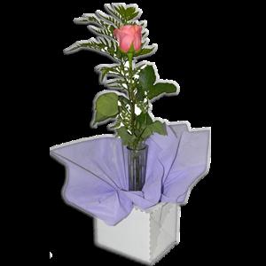 Bud Vase 50 Per Carton Pop Go Floral Box Pop Go Floral Boxes By Wunderlich