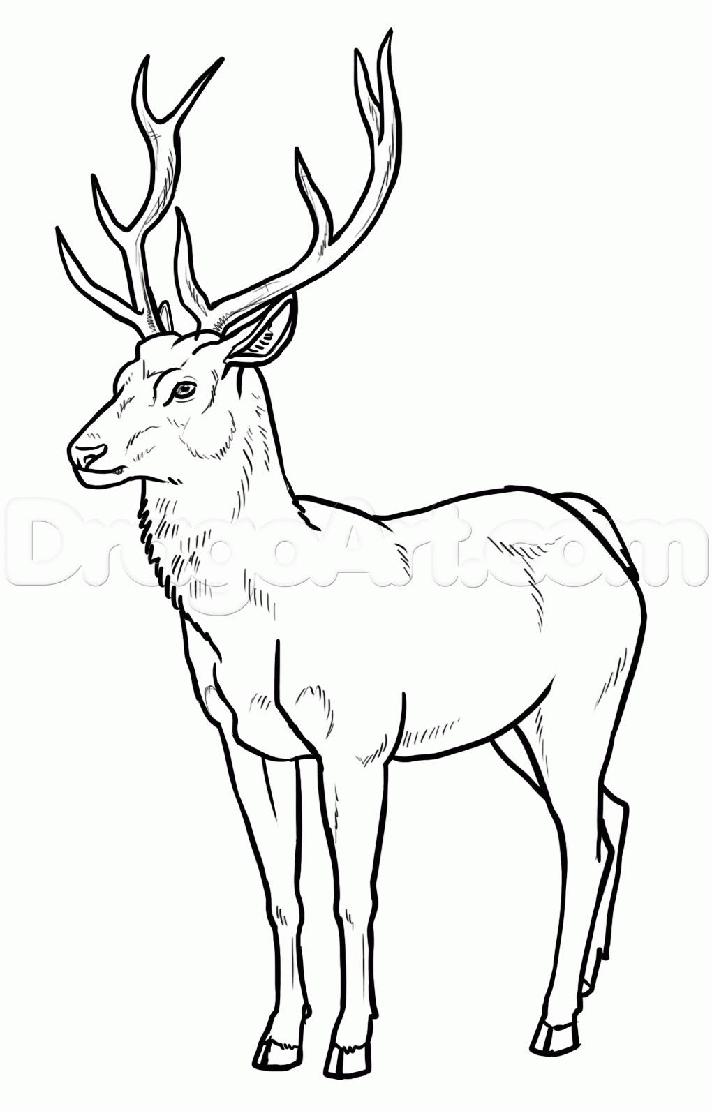 Deer Drinking Water Drawing at GetDrawings | Free download
