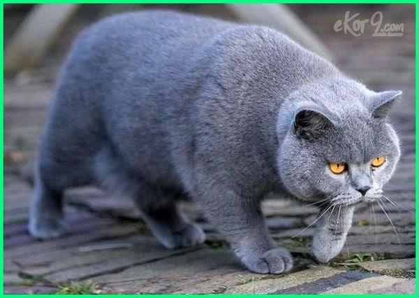 Gambar Kucing Gampang godean.web.id