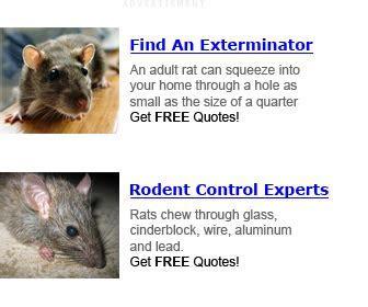 Rat Infestation ? RATCONTROLTRICKS.COM