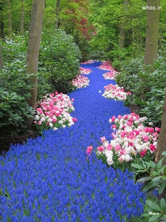 Road Of Blue Flowers Hd Wallpapers