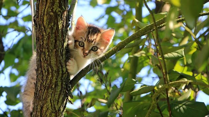 ¿Qué cuidados necesita un gato?