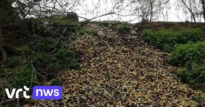 Perenboer dumpt 4 ton peren langs spoorwegbedding in Borgloon