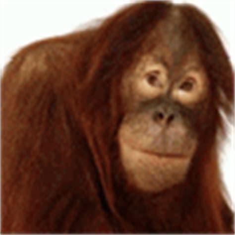 kumpulan animasi monyet bergerak lucu animasi  gambar